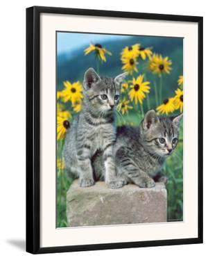Domestic Cat, Two Kittens (Felis Catus) by Reinhard