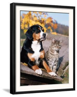 Entlebuch Mountain Dog and Domestic Cat by Reinhard