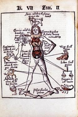 Relationship of the Organs of the Body, the Humours and Signs of the Zodiac, 1508