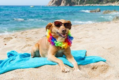 https://imgc.allpostersimages.com/img/posters/relaxing-dog-at-the-beach-with-flowers-garland_u-L-Q1033HJ0.jpg?p=0
