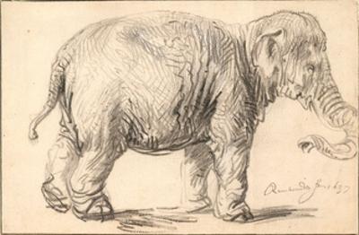 An Elephant by Rembrandt van Rijn