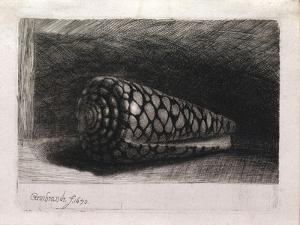 The Shell by Rembrandt van Rijn