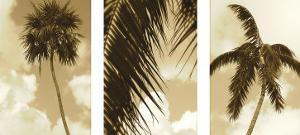 South Beach Palms by Rene Griffith