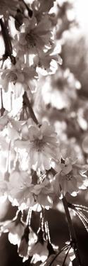 Blossom Triptych II by Renee W^ Stramel