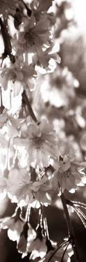 Blossom Triptych II by Renee W. Stramel