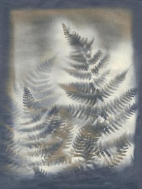 Shadows and Ferns V by Renee W. Stramel