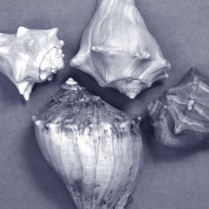 Shell Convergence VI by Renee W. Stramel