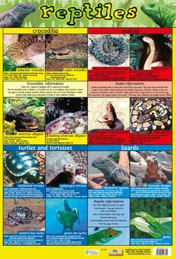 Reptiles Of The World