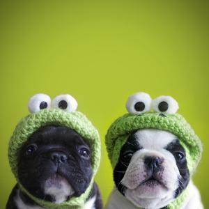 Funny Dogs by retales botijero