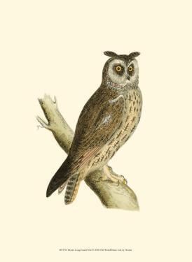 Long Eared Owl by Reverend Francis O. Morris