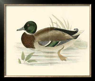 Morris Ducks I