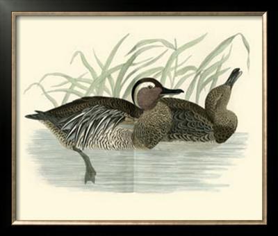 Morris Ducks II