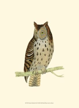 Mottled Owl by Reverend Francis O. Morris