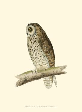 Short Eared Owl by Reverend Francis O. Morris