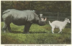 Rhino and Goat, Zoo, Philadelphia, Pennsylvania