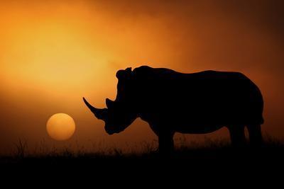 https://imgc.allpostersimages.com/img/posters/rhino-sunrise_u-L-Q19BCUU0.jpg?artPerspective=n