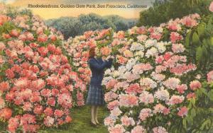Rhododendrons, Golden Gate Park, San Francisco, California