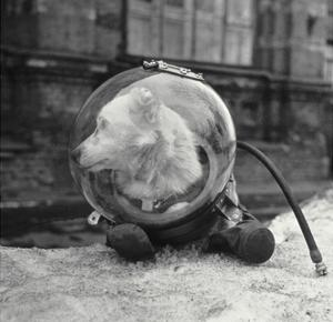 Belka, Soviet Space Dog, In a Spacesuit by Ria Novosti
