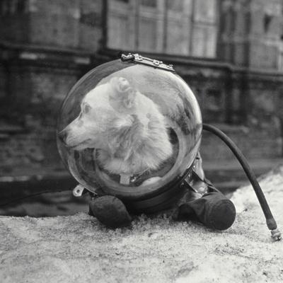 Belka, Soviet Space Dog, In a Spacesuit