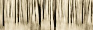 Mystic Forest 1252 Panoramic by Rica Belna