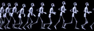 Human Skelegon Running, Radigraphy Sequence by riccardocova