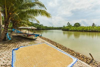https://imgc.allpostersimages.com/img/posters/rice-drying-by-the-cijulang-river-in-south-coast-district-near-pangandara_u-L-PQ8OBB0.jpg?p=0