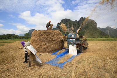 https://imgc.allpostersimages.com/img/posters/rice-field-lao-farmers-harvesting-rice-in-rural-landscape-laos_u-L-Q1GYJGH0.jpg?artPerspective=n