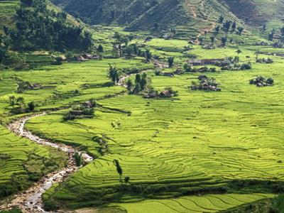 Rice Fields in Sapa Region, North Vietnam, Vietnam, Indochina, Southeast Asia, Asia