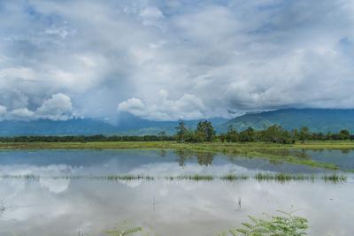 https://imgc.allpostersimages.com/img/posters/rice-fields-near-kentung-burma-during-the-rainy-season_u-L-Q1BB6JV0.jpg?p=0