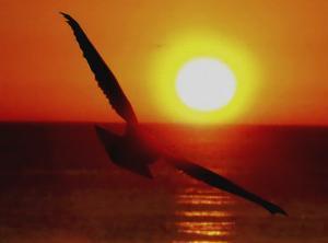 Bird Gliding into Setting Sun by Rich LaPenna