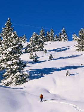 A Hiker Snowshoeing Along a Trail in Fresh Powder by Rich Reid