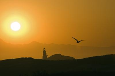 A Segull and the Sun Setting Behind the Lighthouse by Rich Reid