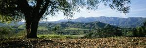A View of a Coast Live Oak and the Santa Ynez Mountains by Rich Reid
