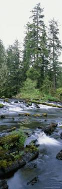 Klawock River and Surrounding Forest in Tongass National Forest by Rich Reid