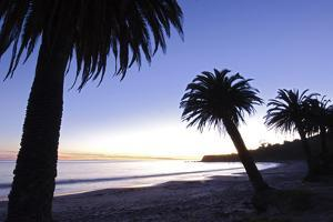 Palm Trees Silhouette at Refugio State Beach in Gaviota, California by Rich Reid