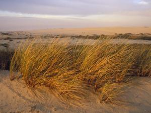 Sand Dunes at Oso Flaco Nature Conservancy, Pismo Beach, California by Rich Reid