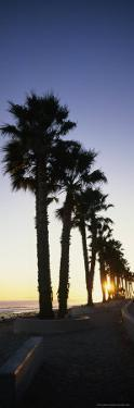 Silhouetted Palm Trees Along Surfers Point at Seaside Park by Rich Reid