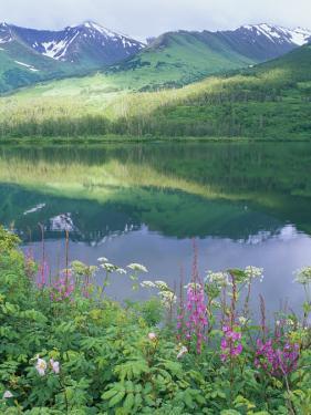 Summit Lake, Sunbeam on Forest, Firewee, Chugach National Forest, Alaska by Rich Reid