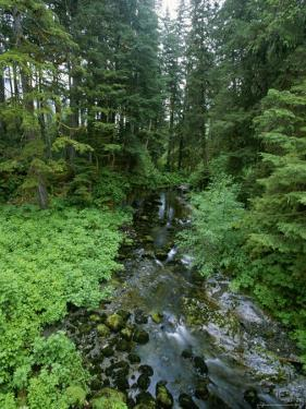 Temperate Rain Forest and Creek in Tongass National Forest, Alaska by Rich Reid