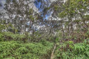 Pepeopae Bog Boardwalk Trail, with Native Ohia Habitat, in Kamakou Preserve, Molokai, Hawaii by Richard A Cooke III