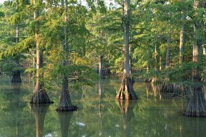 Bald Cypress Trees at Horseshoe Lake Cons. Area, Illinois by Richard and Susan Day