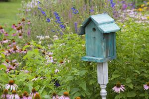 Blue Birdhouse in Flower Garden with Purple Coneflowers and Salvias, Marion County, Illinois by Richard and Susan Day