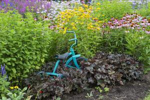 Blue Tricycle in Flower Garden with False Sunflower by Richard and Susan Day