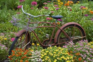 Old Bicycle with Flower Basket in Garden with Zinnias, Marion County, Illinois by Richard and Susan Day