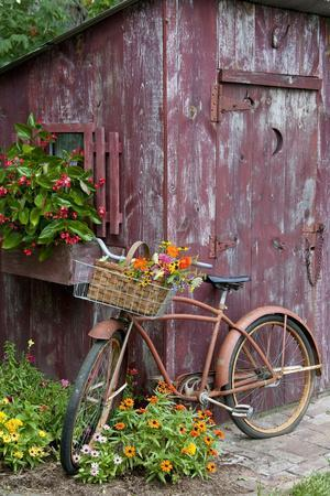Old Bicycle with Flower Basket Next to Old Outhouse Garden Shed