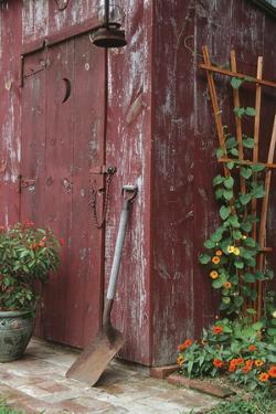 Outhouse Garden Shed Nasturtium Tropaeoium Majus and Thunbergia Lemon Star by Richard and Susan Day