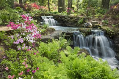 Waterfall with Ferns and Azaleas at Azalea Path Arboretum and Botanical Gardens, Hazleton, Indiana