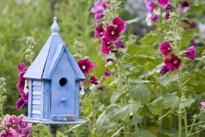 Blue Birdhouse Near Hollyhocks. Marion, Illinois, Usa by Richard ans Susan Day