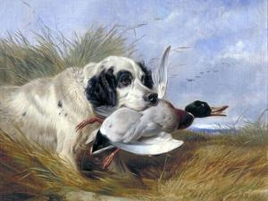 Dog with Wild Duck, 19th Century by Richard Ansdell