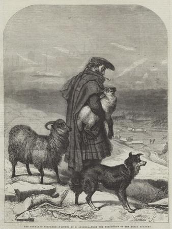 The Highland Shepherd